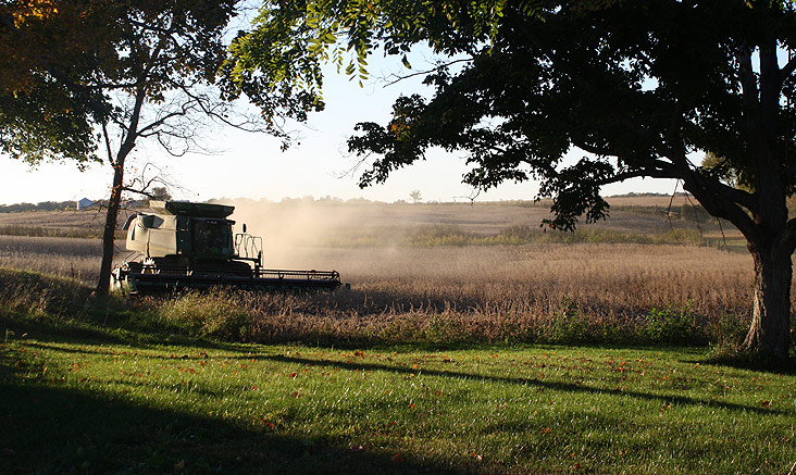 Harvest: Davis Family Farms